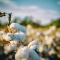 Organické vložky a tampóny šetrné k ženám i přírodě