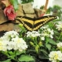 Motýlí dům v komplexu Diana v Karlových Varech