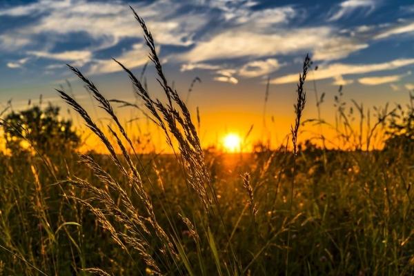 Svítí, svítí slunce ...