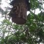 Fauna na Bali