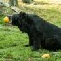 Komentované krmení v Zoo Ostrava