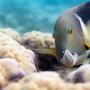 3D film Oceány: Naše modrá planeta