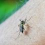 Domácí repelent ve spreji (proti komárům i klíšťatům)