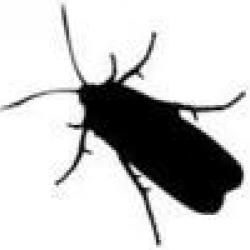 insect-vector_small.jpg