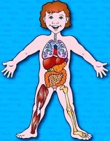 Výsledek obrázku pro lidské tělo pro děti