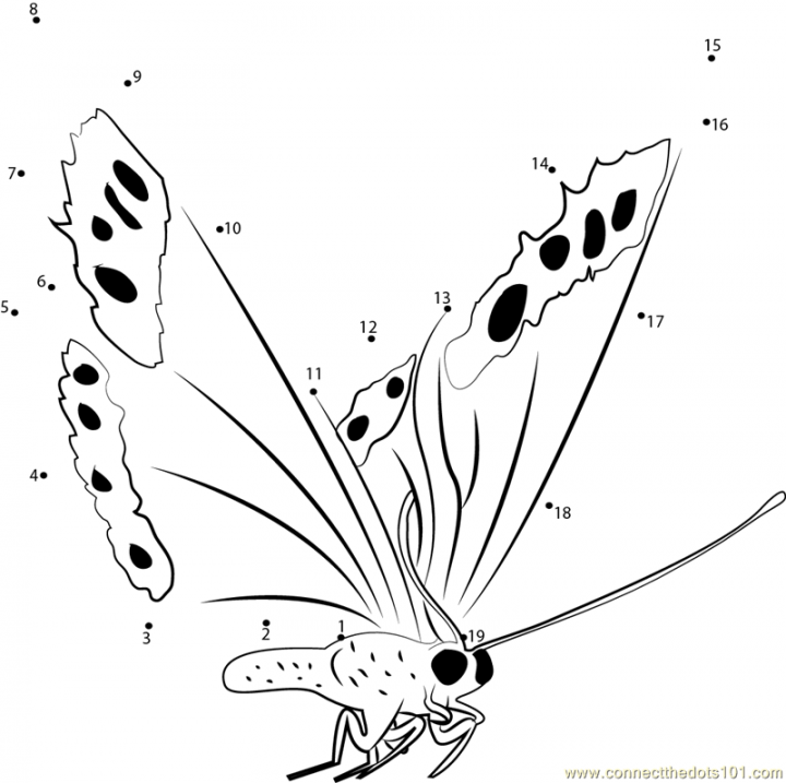 Fly_Butterfly_connect_dots.png