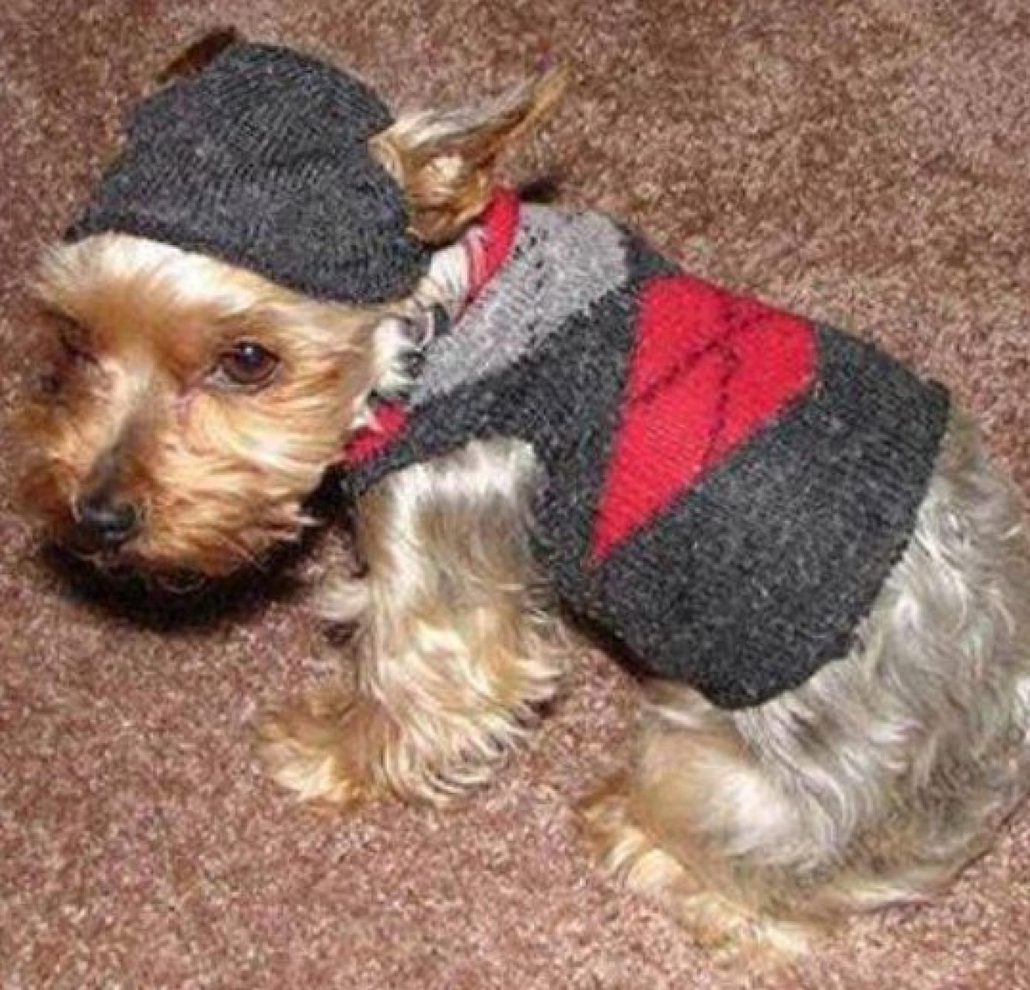 Одежда для собак своими руками в домашних условиях
