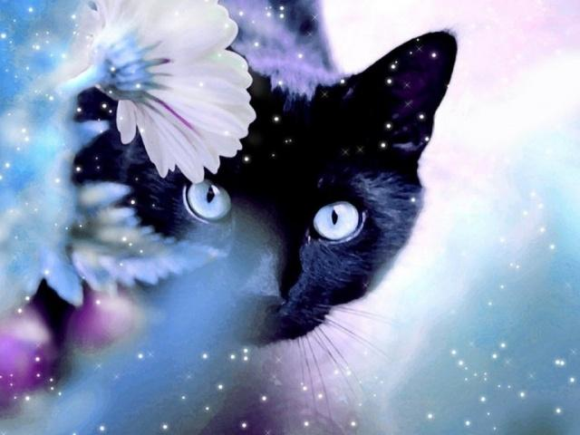 černá kočička černá kočička černá kočička extrémně drsné gay porno